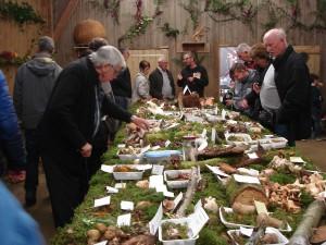 Rando cueillette de champignons @ écomusée La Ferme d'Antan   Plédéliac   Bretagne   France