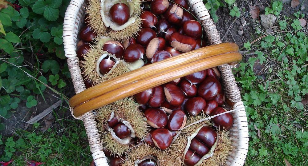chaudles-chataignes-oct-2015-ferme-dantan-1